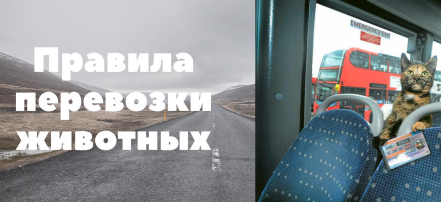 Правила перевозки животных в автобусе